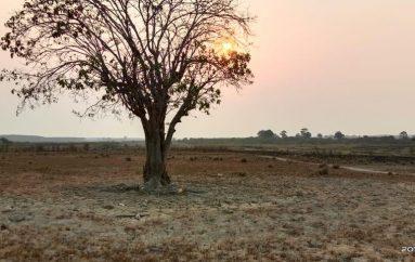 Antara Q Forest Dengan Penyelamatan Ekosistem Rawa Tubaba