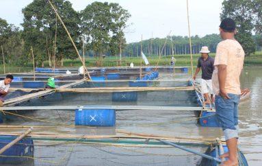 Warga Manfaatkan Sungai Dam Raman Sebagai Budidaya Ikan Air Tawar