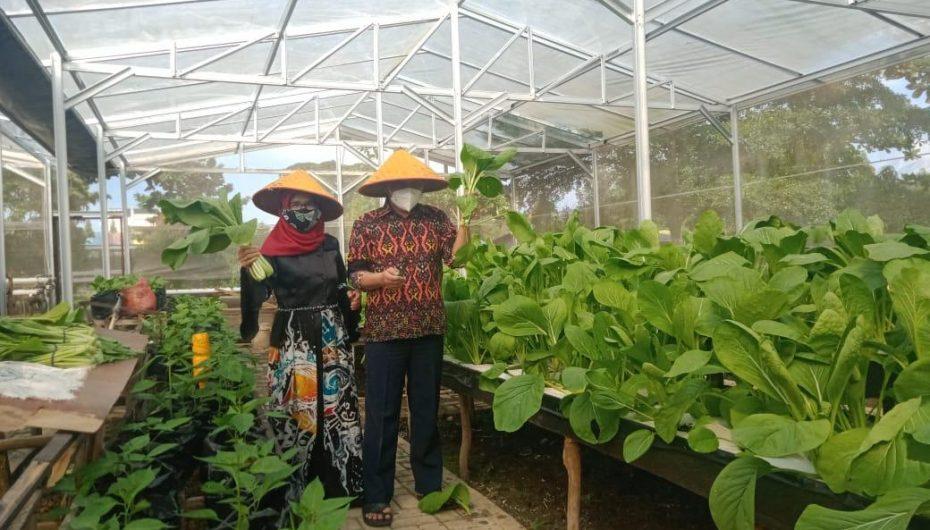 Wakil Wali Kota Metro Panen Sayuran di Green House TMII