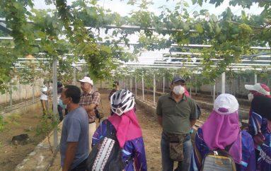 Bersepeda, Wali Kota dan Wakil Wali Kota Metro Kunjungi Kampung Anggur